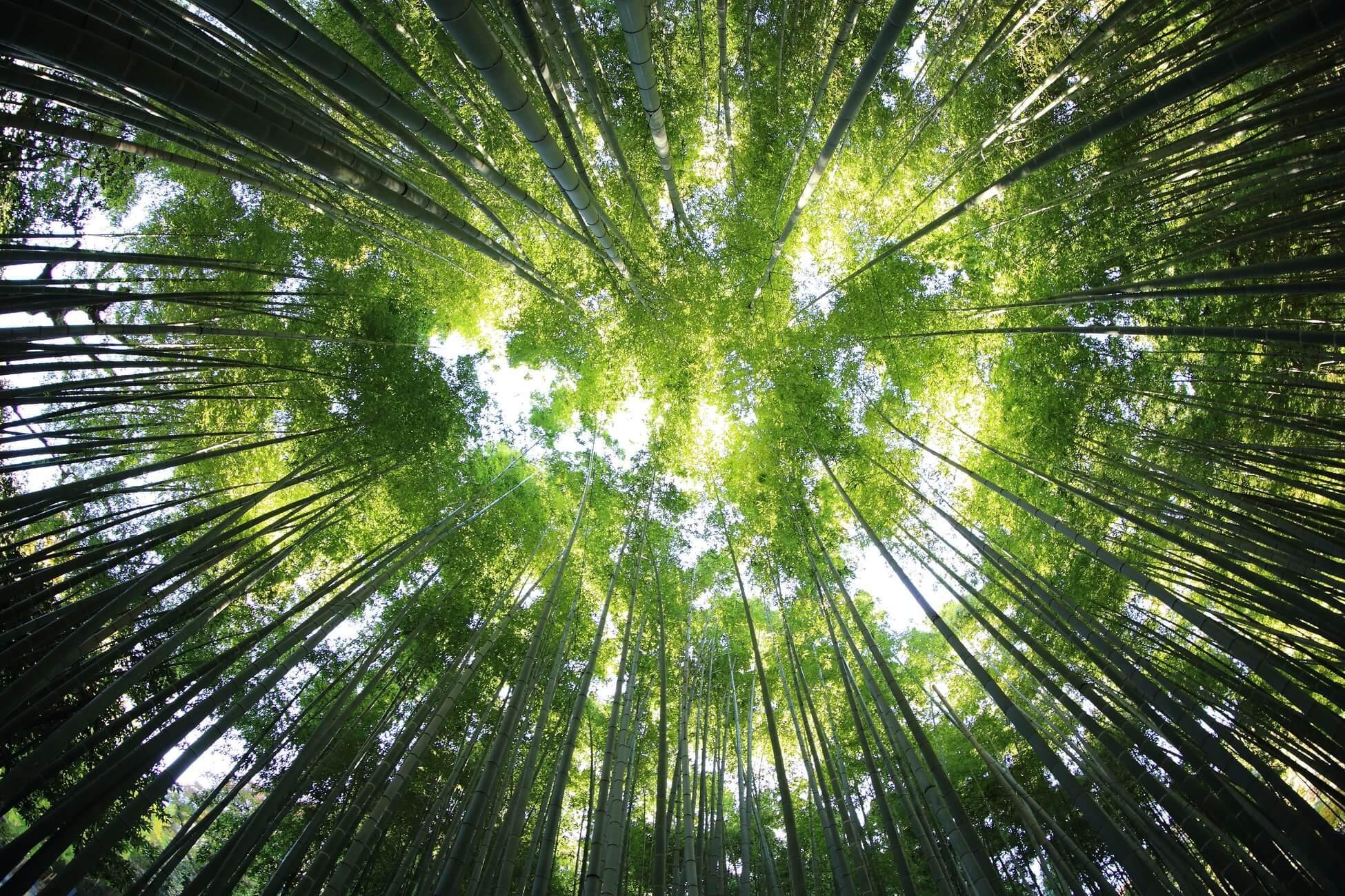 青々と茂った森の木々たち