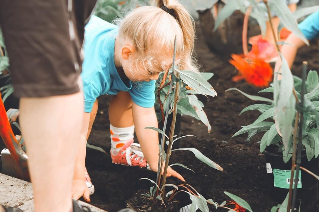 木を植える少女