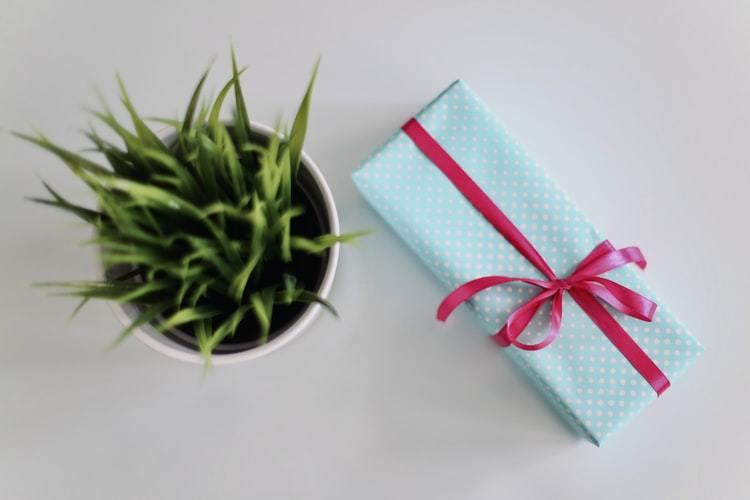観葉植物とギフトボックス