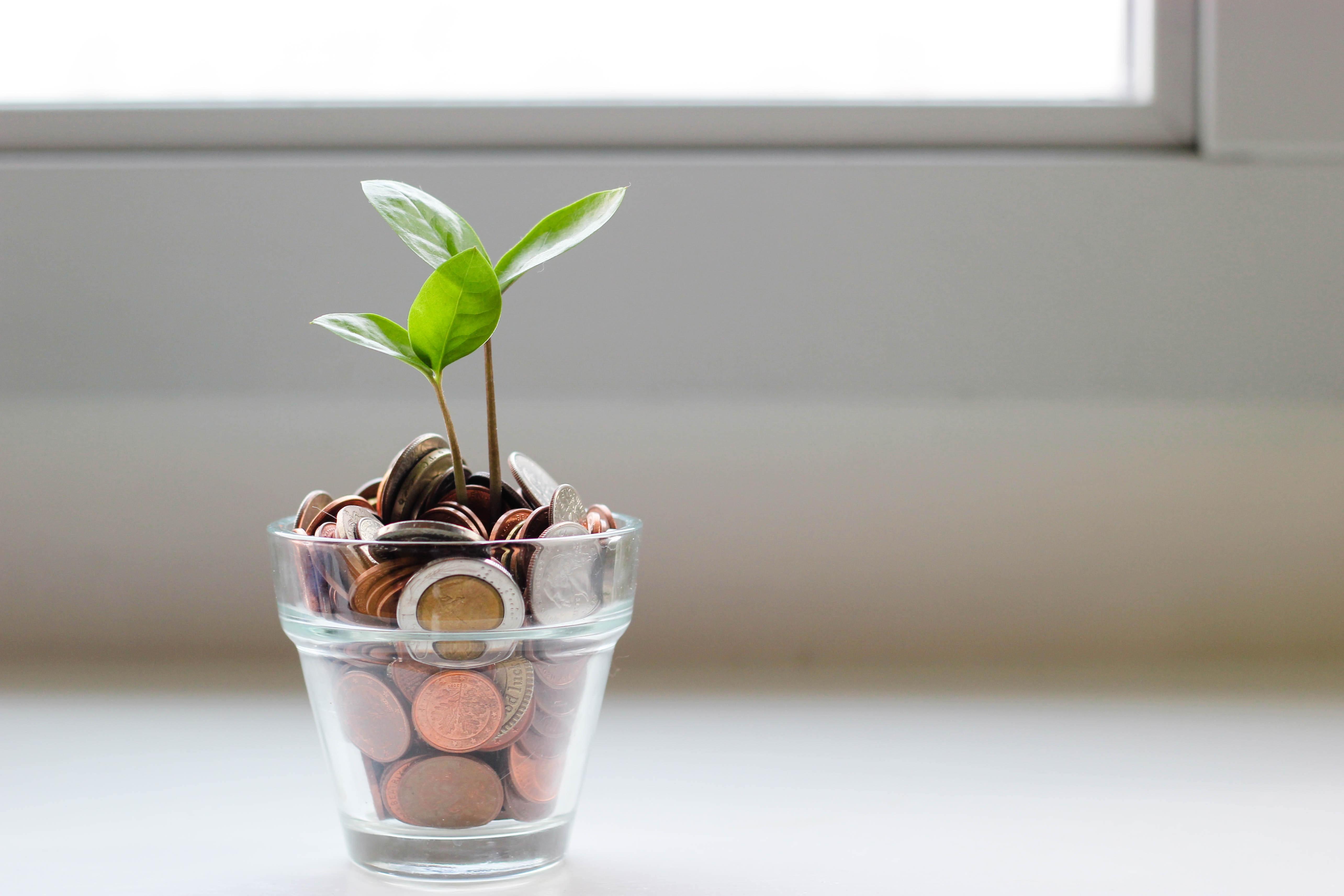 植木の貯金箱