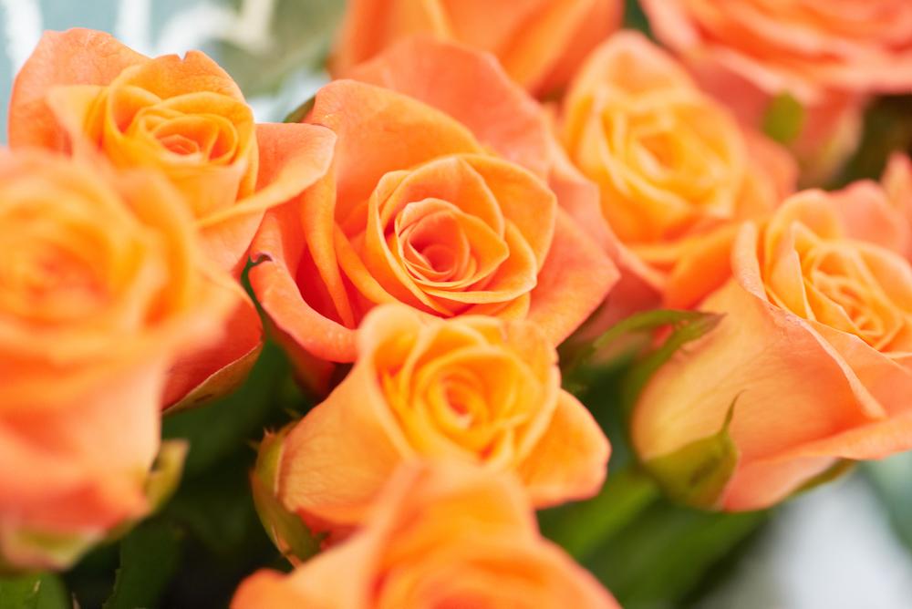 束ねられたオレンジのバラ